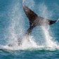 Whale Watching Photo Competition