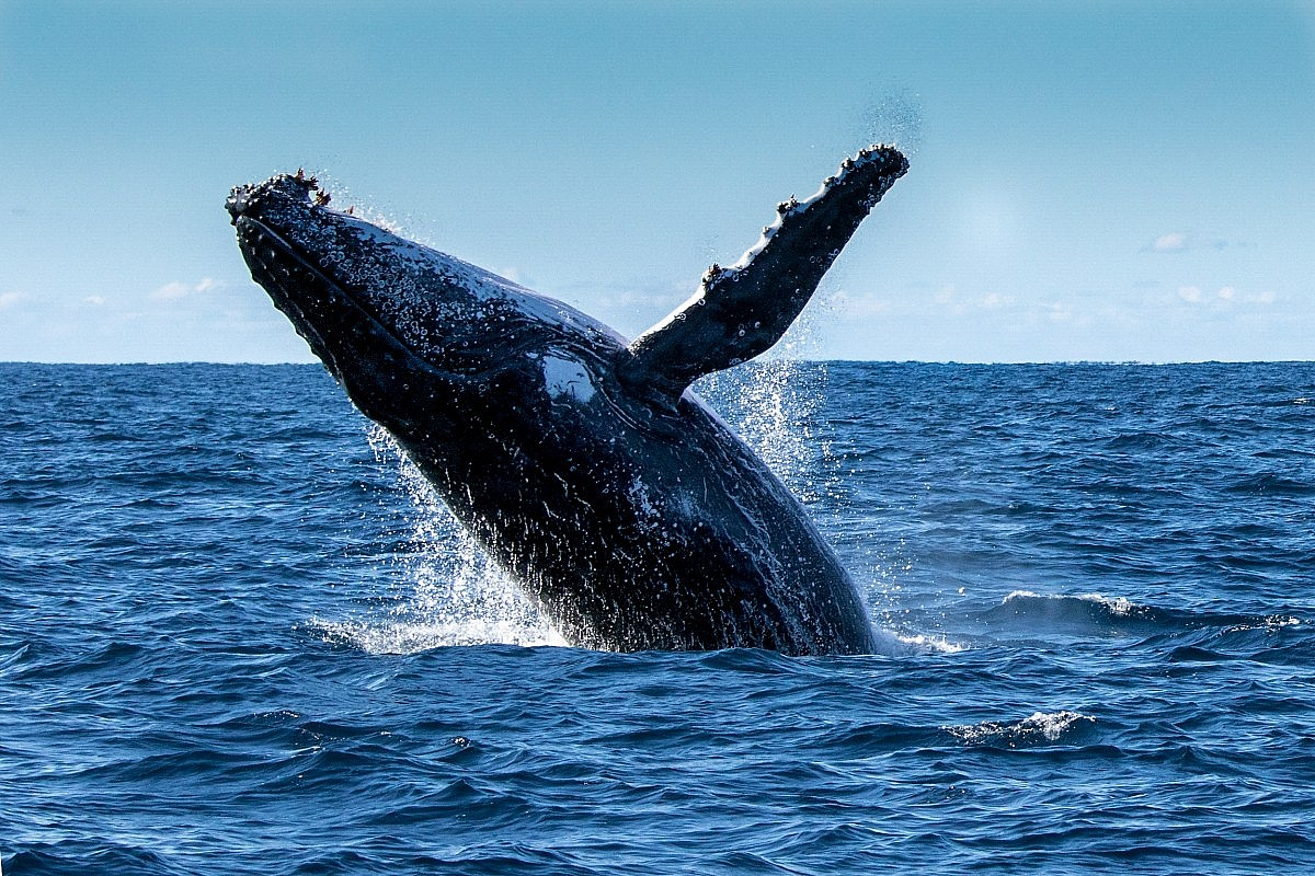 whale watching perth timetable u0026 prices rottnest fast ferries